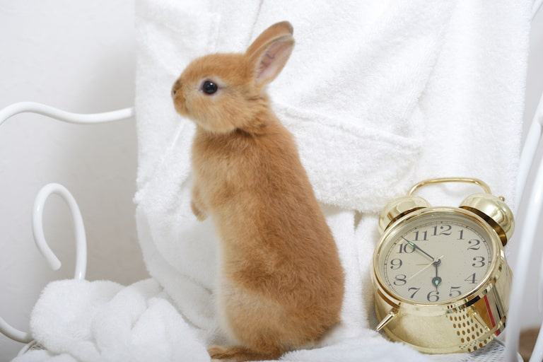 ウサギの匂いが気にならない部屋にするための対策